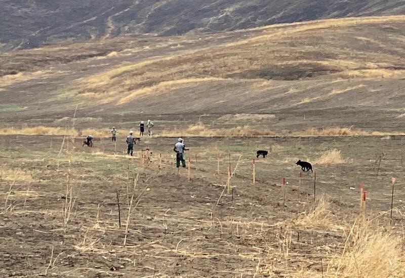 Названа площадь освобожденных земель Азербайджана, очищенных от мин