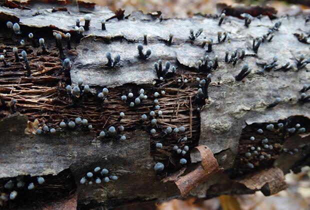 В России нашли уникальный гриб