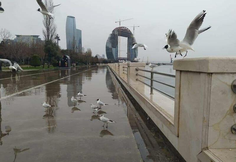 Какой будет погода в Баку завтра?