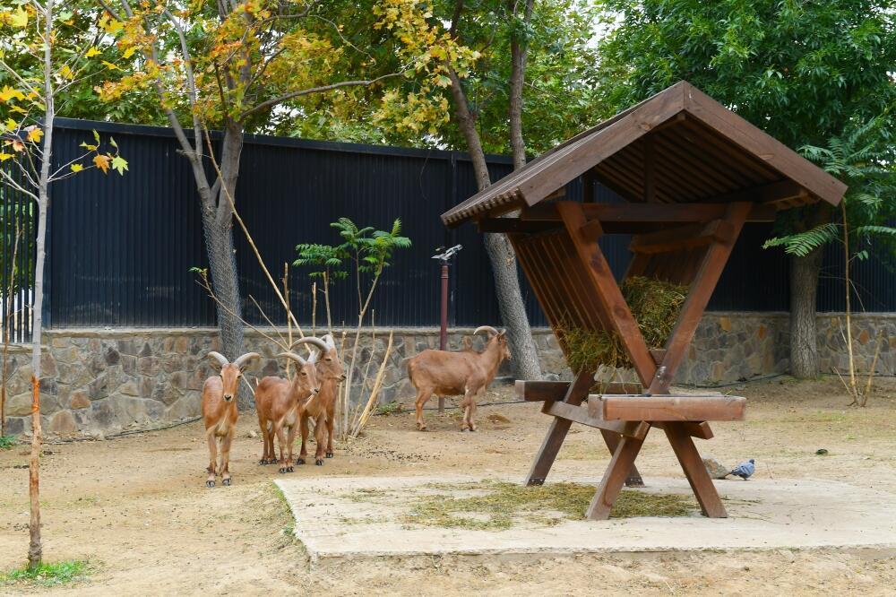 Президент Ильхам Алиев и Первая леди Мехрибан Алиева приняли участие в открытии после реконструкции Бакинского зоологического парка