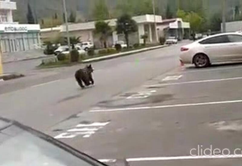 По Балакену гуляют медведи