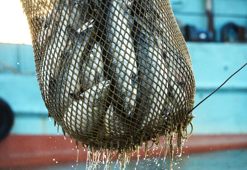 Ученые назвали рыбу, которая снимает воспаления в организме