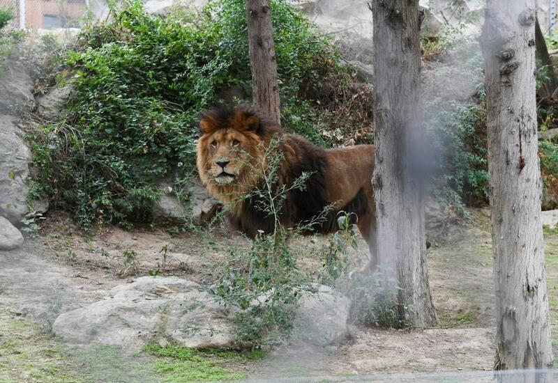 Названа стоимость билетов в Бакинский зоопарк