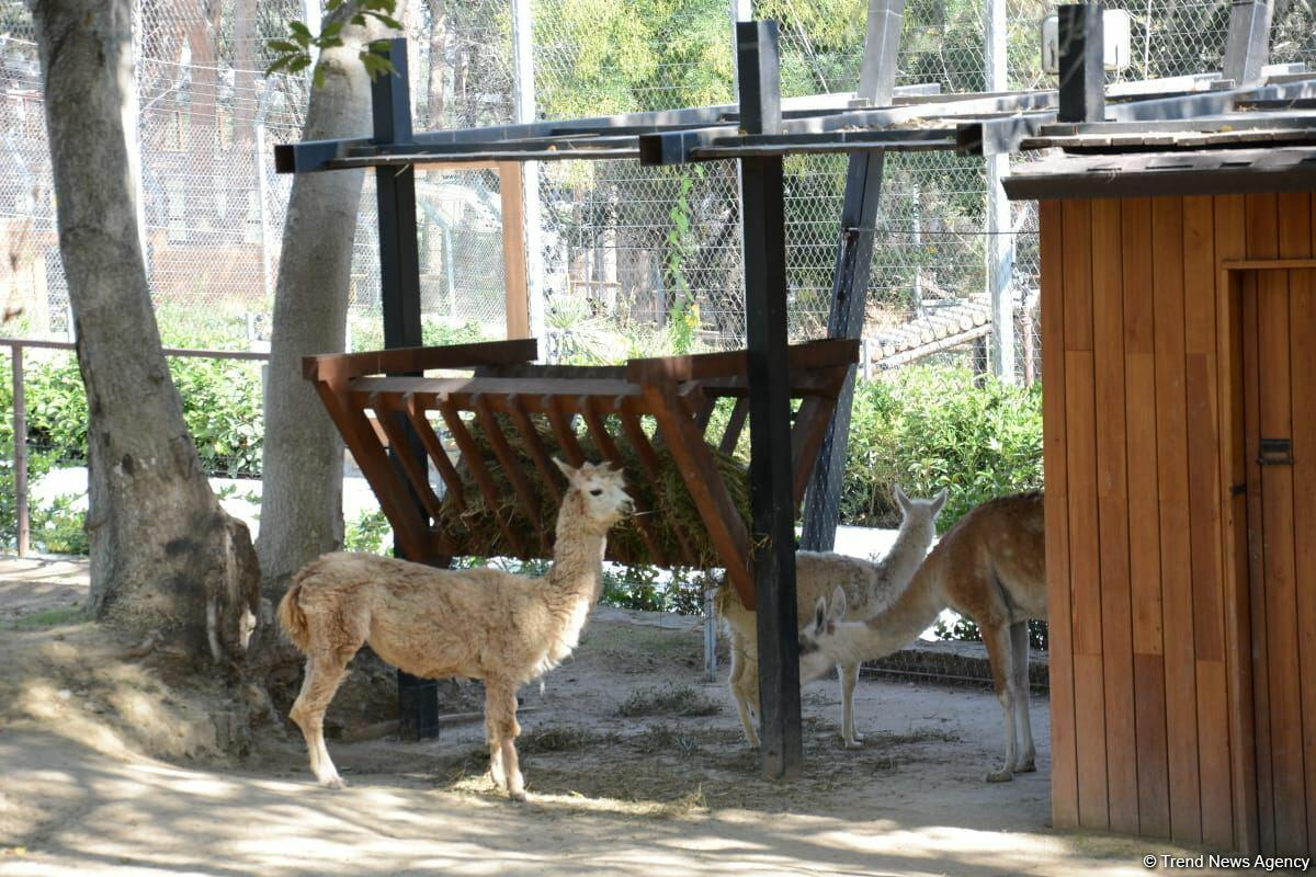 Первыми посетителями Бакинского зоопарка стали дети шехидов и воспитанники детдомов