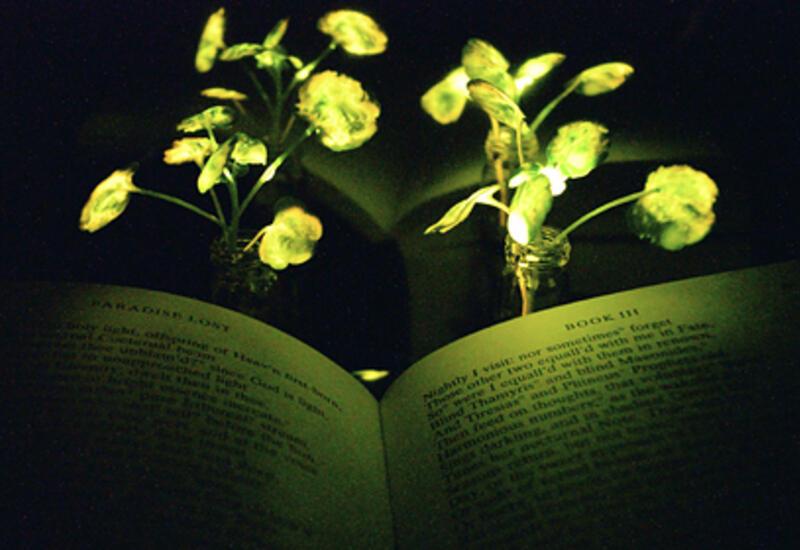 В США изобрели фонари из растений
