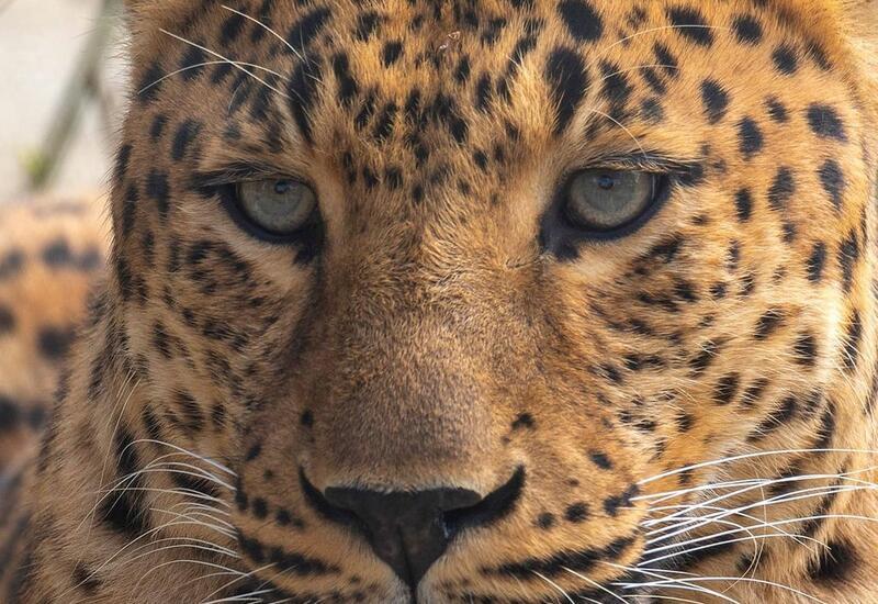 Портреты обитателей Бакинского зоопарка в блоге Лекина