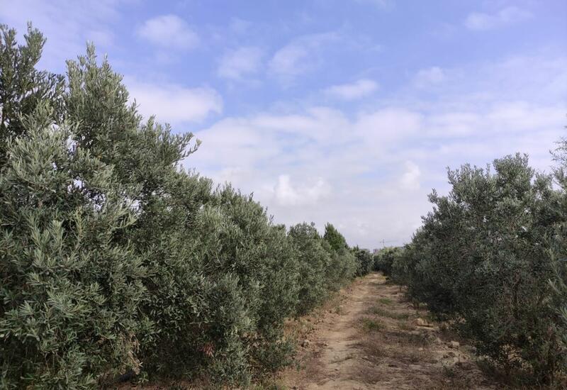 В пригороде Баку озеленили территории площадью 1200 га