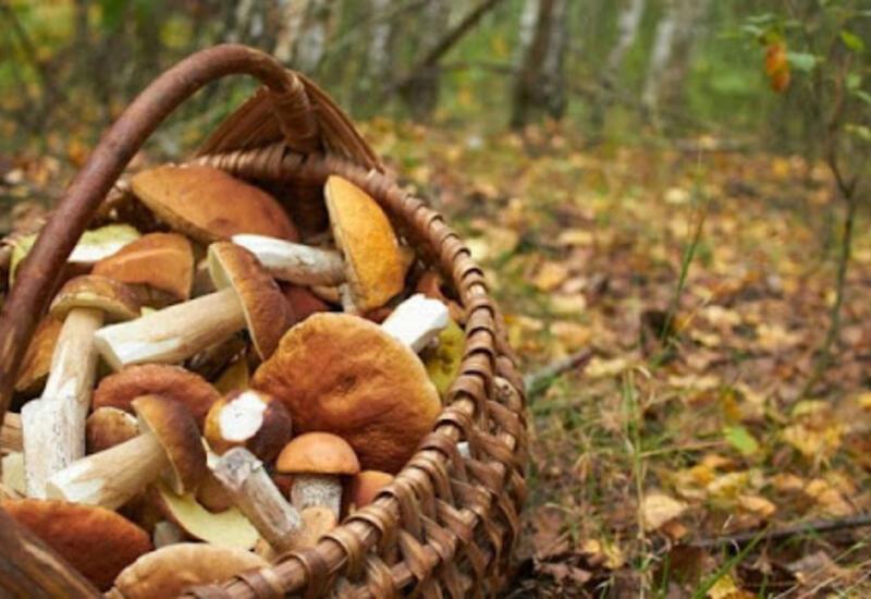 Генпрокуратура Азербайджана расследует факт смерти детей от отравления грибами в Гахском районе