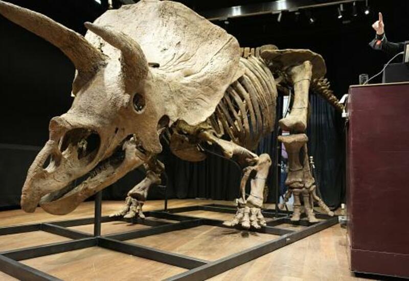 Скелет трицератопса купили почти за 6 млн евро