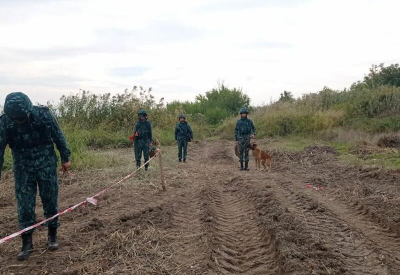 В ГПС Азербайджана назвали количество мин и боеприпасов, обнаруженных на освобожденных приграничных территориях