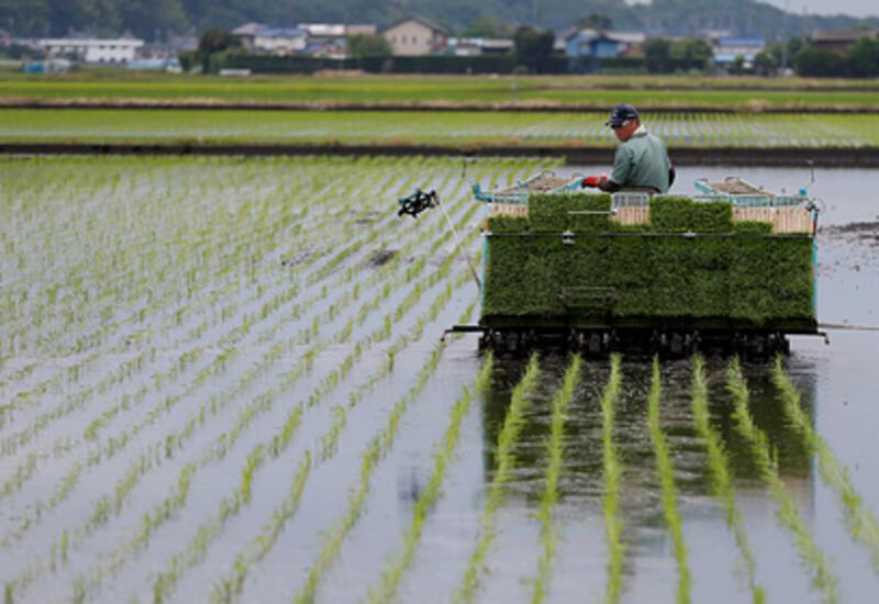 В Японии заметили неожиданную выгоду от глобального потепления
