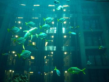 Более 10 тысяч рыб погибли в ожидании переселения в аквариум
