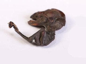 Рыбак думал, что убил мышь, а оказалось - пришельца - ФОТО