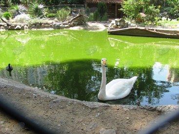 За год до трагедии: каким был прекрасный Тбилисский зоопарк - ФОТО