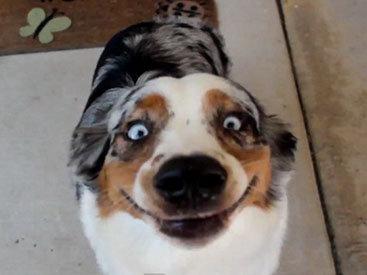 Собачий позитив: самые забавные снимки четвероногих - ФОТО
