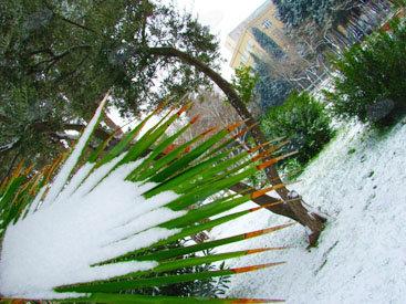 Вспоминая первый снег в Баку - ФОТОСЕССИЯ