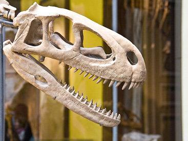 Продается скелет динозавра