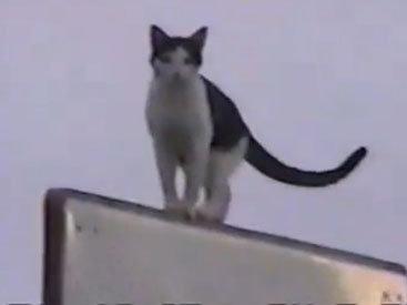 Отчаянные попытки кота спуститься с баскетбольного щита - ВИДЕО