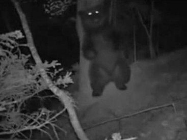 Минута позитива: чем занимается медведь ночью в лесу - ВИДЕО