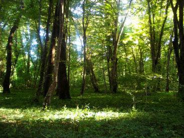 Желто-зеленая осень: неповторимый север Азербайджана - ФОТО