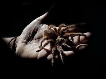 Чилийская паучья ферма - ФОТОСЕССИЯ