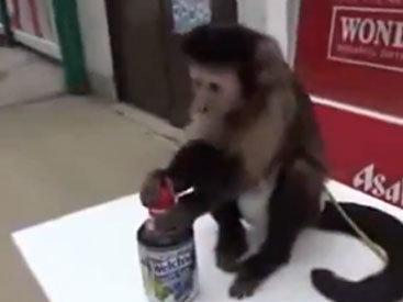 Забавная обезьяна ухаживает за собой - ВИДЕО