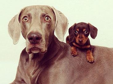 Забавная парочка: Харлоу и Инди – лучшие друзья - ФОТОСЕССИЯ