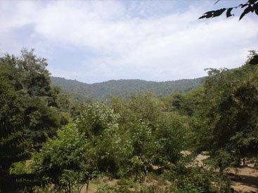 В объятиях высоты: суровая красота Балакенского района Азербайджана – ФОТОСЕССИЯ