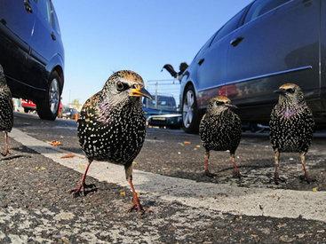 Победители британского конкурса фотографий дикой природы - ФОТОСЕССИЯ