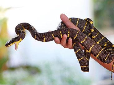 Впервые в мире 2 редчайшие змеи отложили яйца в неволе