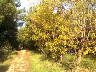 Холодное солнце октября: золотая осень в ботаническом саду в Азербайджане – ФОТОСЕССИЯ