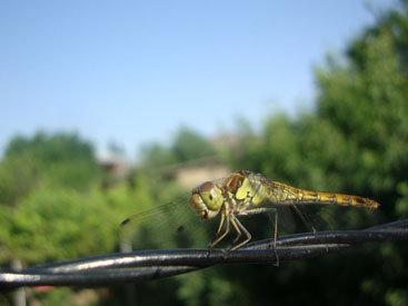 Лики природы в красках лета - ФОТОСЕССИЯ