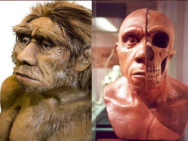 "Как Homo sapiens ""съели"" неандертальцев - ФОТО"