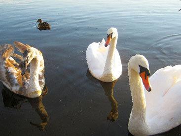 Королевские птицы на зимнем полотне - ФОТОСЕССИЯ