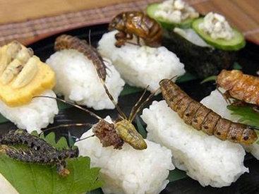 Блюда из червей, личинок и сверчков завоевывают Европу и США
