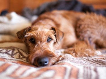 В Бразилии собаки получили право на моральную компенсацию от хозяев