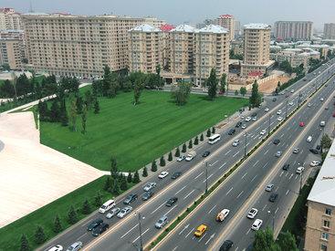 Тревожный сигнал: Сосновая роща в Баку в опасности – ЕСТЬ МНЕНИЕ