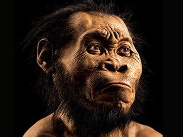 В Африке обнаружен новый вид человека - ФОТО