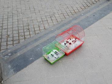 Как мошенники издеваются над животными в центре Баку - ФОТО