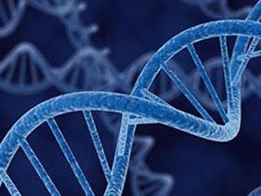 Найден ген, отвечающий за старение и ожирение