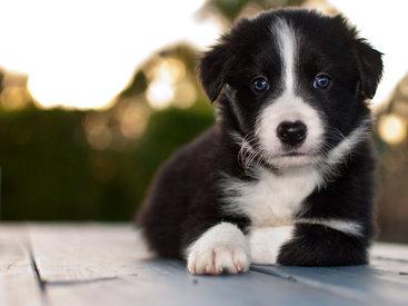 Как превратить жизнь любимой собаки в праздник - ФОТО