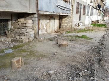Деревья продолжают рубить. Акт вандализма или забота о населении? – ФОТО