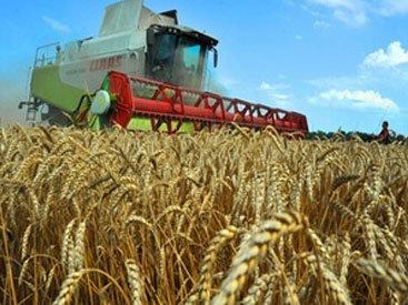 Азербайджан реализует инновационные проекты для развития сельского хозяйства