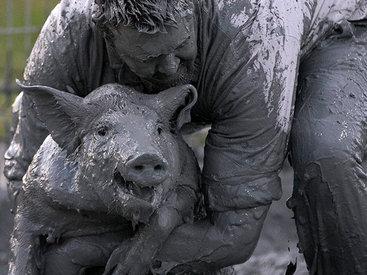 Конкурс грязной свиньи в Канаде - ФОТО
