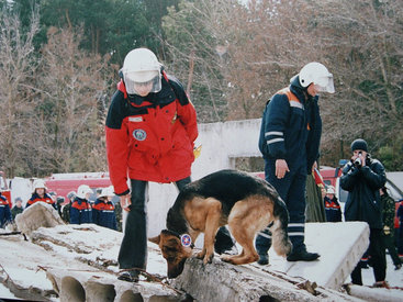 Собака спасла от гибели целую семью