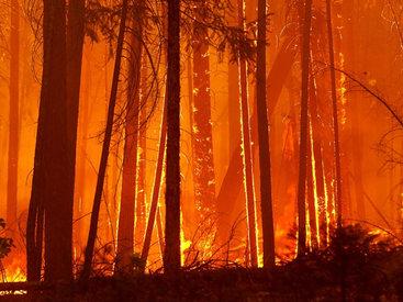 Канадская армия тушит лесные пожары