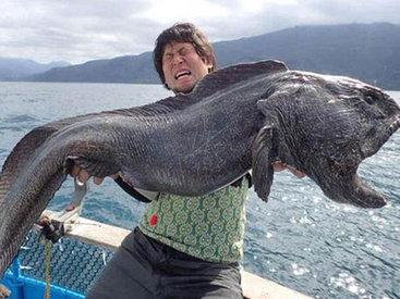 Гигантская рыба-мутант у берегов Фукусимы
