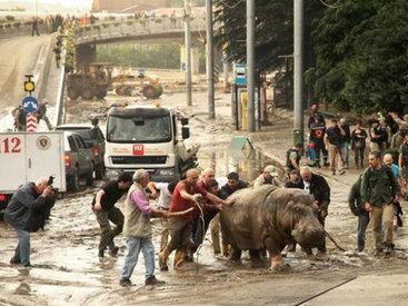 Спецназ расстрелял разбежавшихся в Тбилиси хищников - ВИДЕО