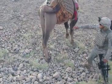 Афганский верблюд расправился с американским морпехом - ВИДЕО