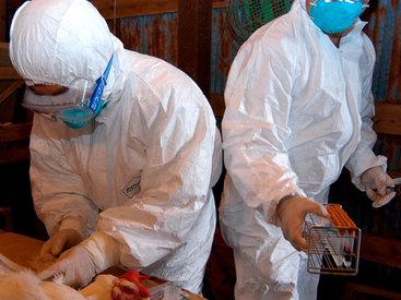Вспышку птичьего гриппа выявили в Японии